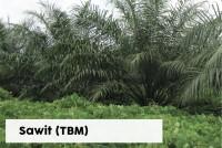 Sawit TBM