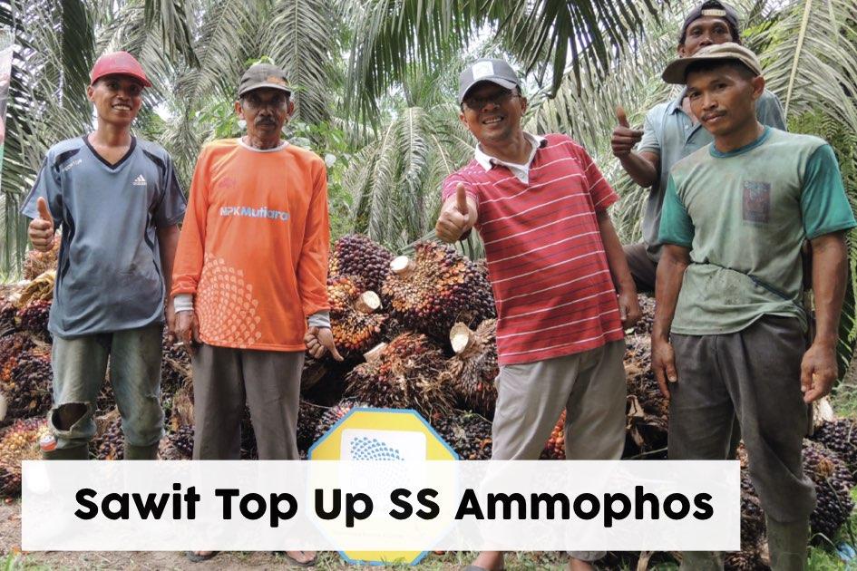Sawit TM-TSP-SS Ammophos
