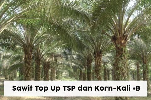 Sawit Top Up TSP dan Korn-Kali+B