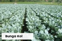 Bunga Kol