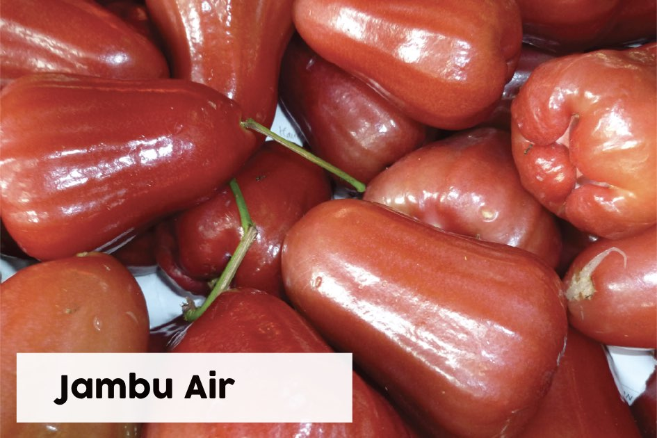 Jambu Air