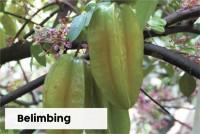 Belimbing
