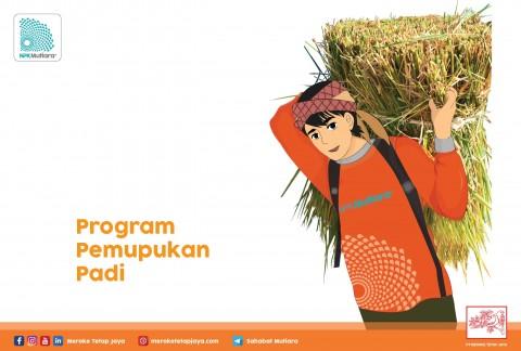 Program Pemupukan Padi Meroke Tetap Jaya