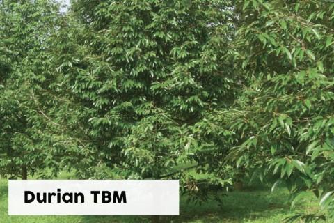 Durian TBM