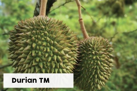 Durian TM