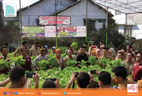 Panen Perdana Kebun Hidroponik Pemkab Bangka