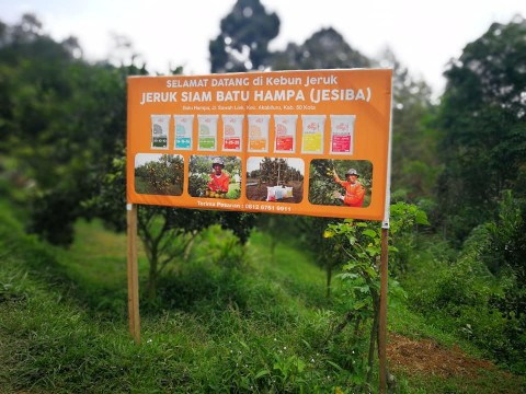 Testimoni Mutiara: Petani Jeruk di Sumatera Barat