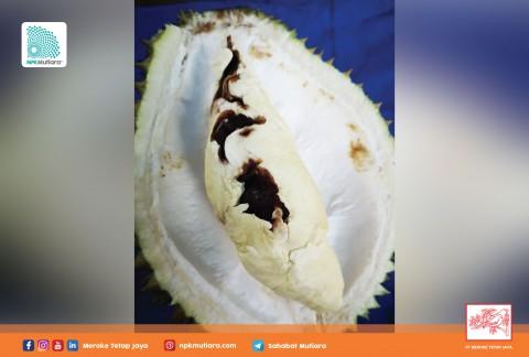 Cegah Defisiensi Kalsium dan Boron pada Durian