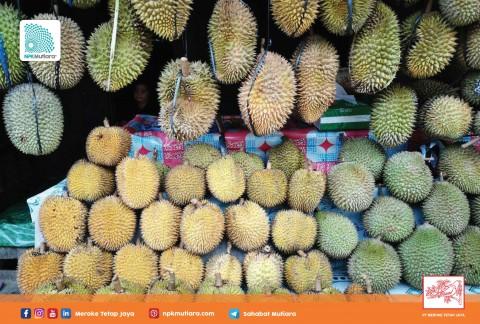 Memilih Durian yang Bagus