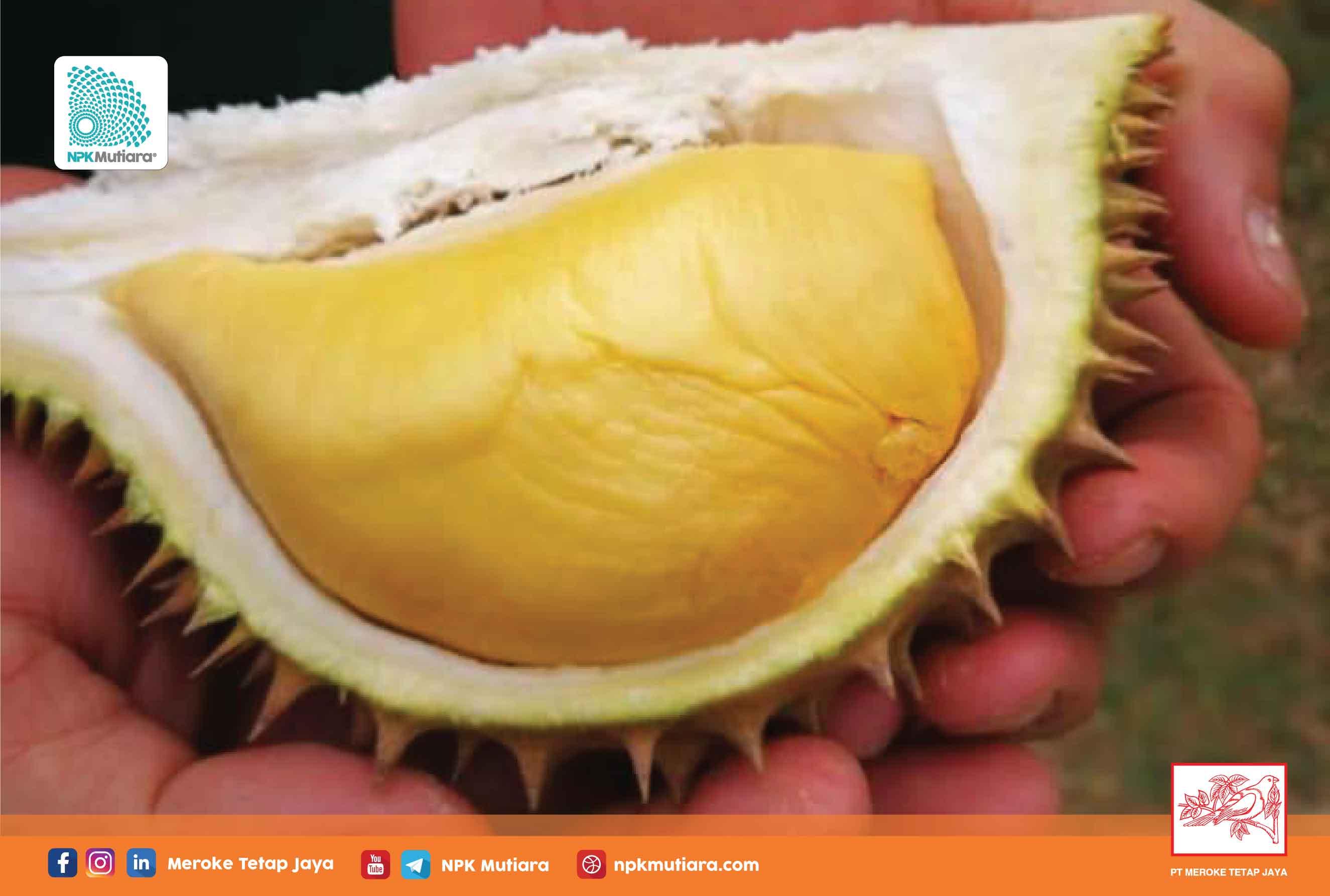 Pupuk Kalium untuk Durian