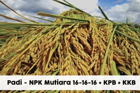 Padi NPK Mutiara 16-16-16 + KPB + KKB
