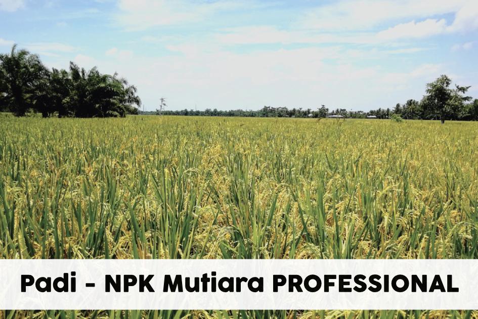 Padi NPK Mutiara PROFESSIONAL 9-25-25