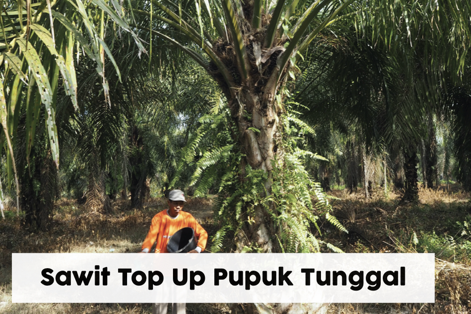 Sawit TM Pupuk Tunggal